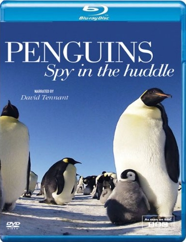 boom competitions - win a copy of Penguins: Spy in the Huddle on Blu-ray